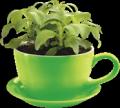 Stevia Produkte von Natusweet